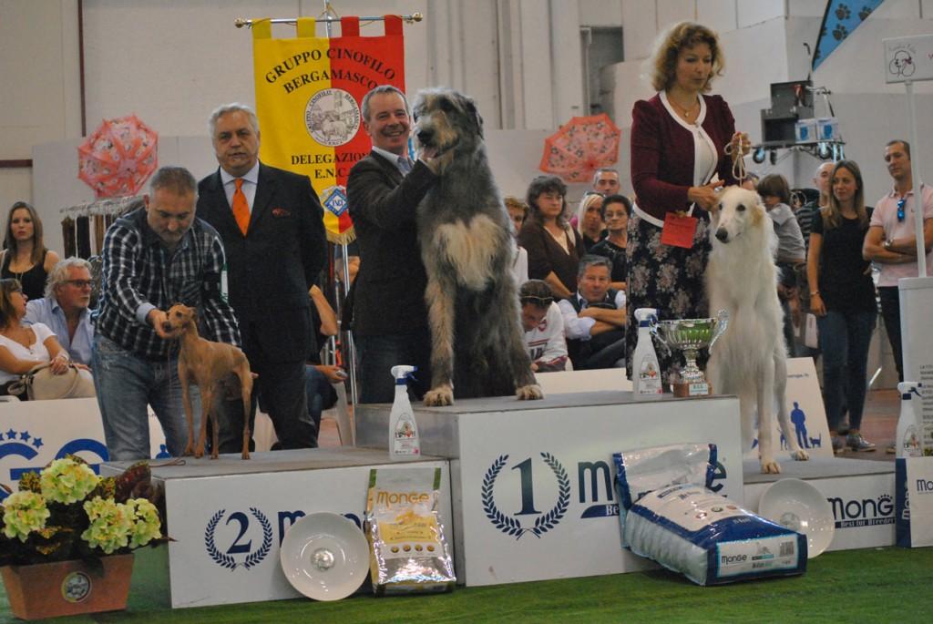 Araberara Pighes, vince il raggruppamento dei levrieri alla internazionale di Bergamo, condotto da Stefano Pianezzola