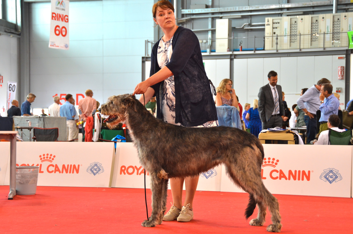 Pina at word dog show